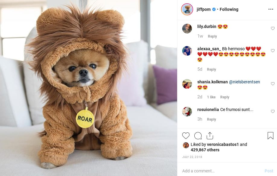 Jiffpom on Instagram make money with dogs