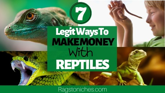 legit ways to make money from reptiles